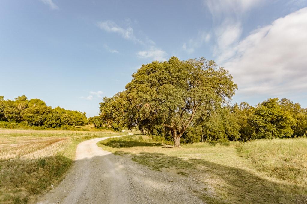 Camino de llegada a Mas Terrats con columpio