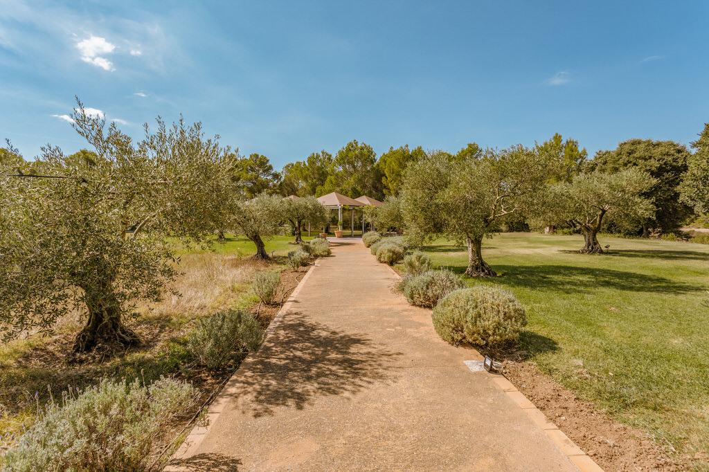 camino que lleva a los olivos y el pabellón en Mas Terrats