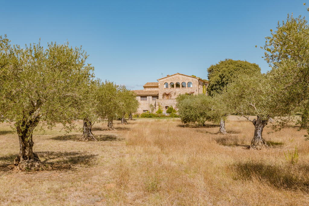 Campo de olivos y Mas Terrats al fondo